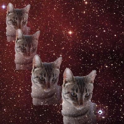 Multi-Tabby Star