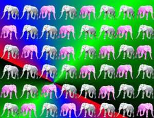 many elephants