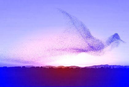 Bird made out of birds 1
