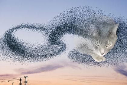 Cat emerging from murmuration